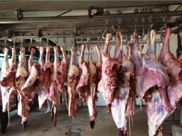 رئيس الشركة المصرية للحوم : ضخ 170 طنا خلال عيد الأضحى…تعرف على الأسعار